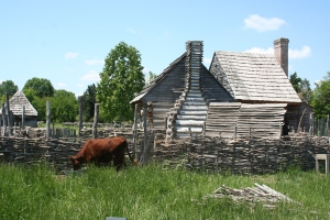 red-milking-devon-steer-and-colonial-site-farmhouse