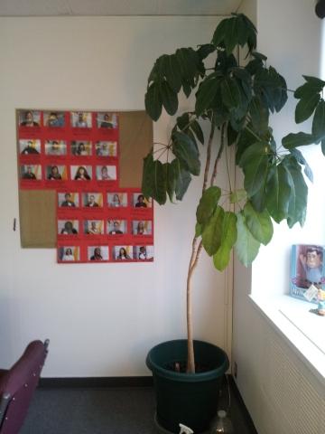 VM Tree