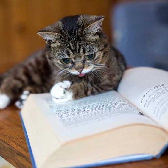 Lil Bub Reading