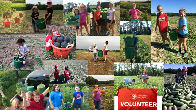 Amazing young volunteers of the Farm to Food Bank Program